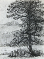 Longs Peak Tree